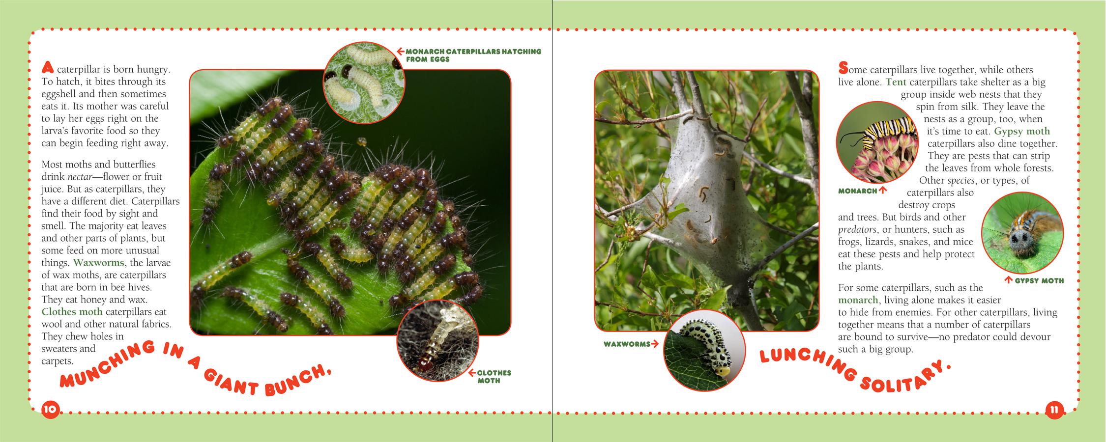 Caterpillars_5-6